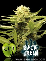 black dream, black dream eva seeds